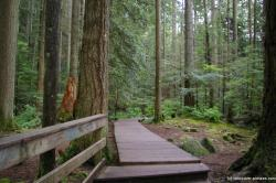 Trail leading off from the Lynn Canyon suspension bridge.jpg