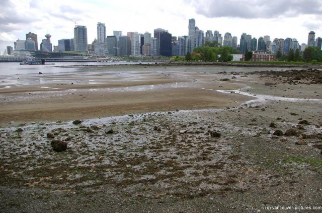 View of Vancouver from Stanley Park (6).jpg